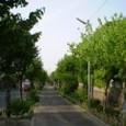 春の歩道街路樹